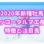 【2020年度新種牡馬】ホッコータルマエ産駒の評判は?特徴と注目馬も紹介