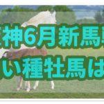 新馬戦に強い種牡馬を調べてみた!!【阪神競馬場編】