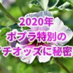 ポプラ特別【2020年】の結果!!朝イチオッズから分析してみた