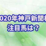 神戸新聞杯【2020年】の過去データから注目馬を紹介!!