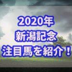 新潟記念【2020年】過去データから注目馬を紹介!!