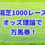 新潟芝直線1000レースもオッズ理論で撃破!!オッズだけで万馬券を獲る!!